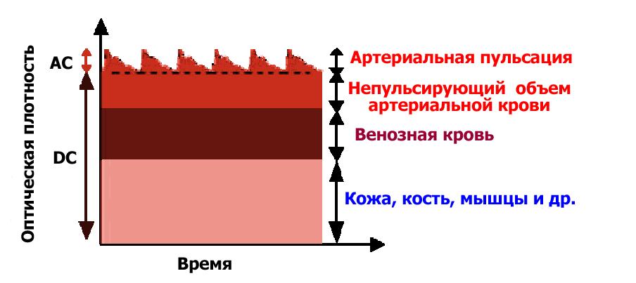 Схема формирования фотоплетизмографического сигнала